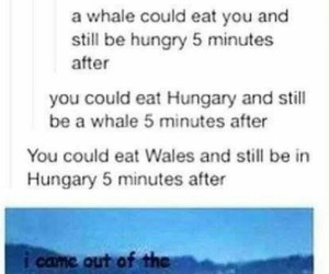 funny, tumblr, and whale image