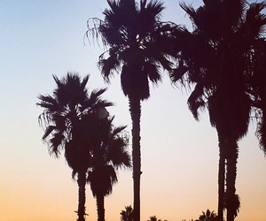 california, palms, and cute image