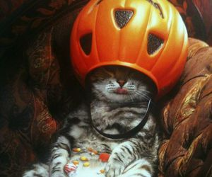 cat, Halloween, and candy image