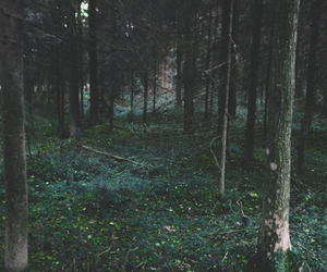 forest, grunge, and scary image