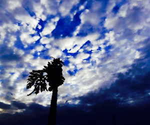 beautiful, palms, and clouds image