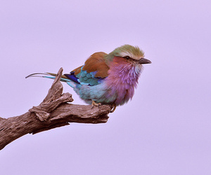 bird, colorful, and color image