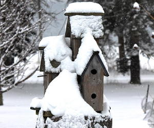 artwork, birdhouse, and nature image