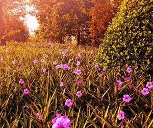 flowers, garden, and grass image