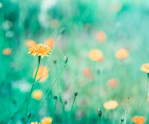 flowers, lovely, and pastel image