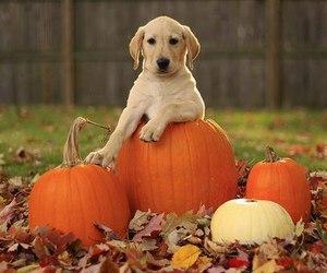 dog, pumpkin, and animal image