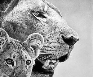 lion, animal, and drawing image