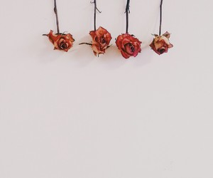 dry, flower, and flowers image
