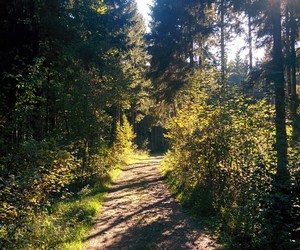 forest, lovely, and road image