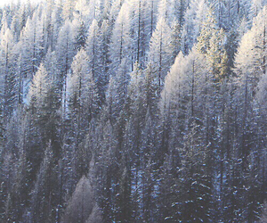 winter, snow, and forest image