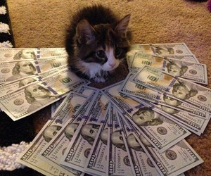 cat, money, and dollar image