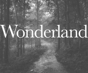 wonderland and forest image