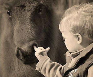 horse and funny image
