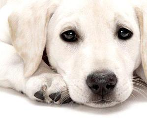 dog, cute, and sweet image