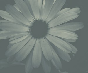filter, flower, and nature image