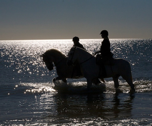 horses, ocean, and sunset image