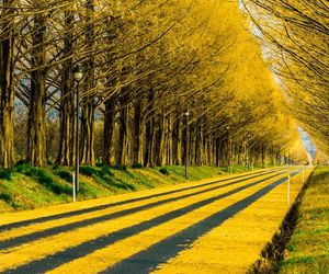yellow, autumn, and fall image