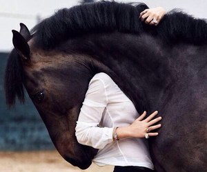 equestrian, equestrianism, and horses image