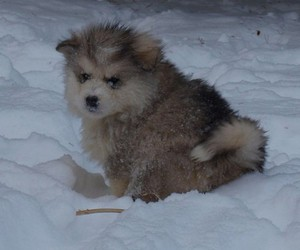fluffy, puppy, and snow image