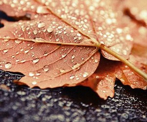 autumn, drops, and tree image