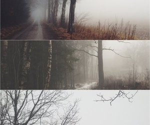 forest, landscape, and photography image