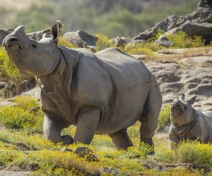 San Diego, safari park, and rhino mother and baby image