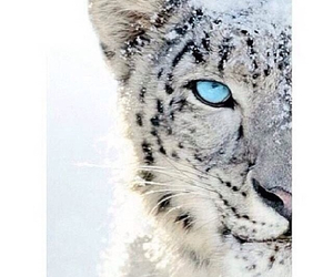 cute, blue, and tiger image