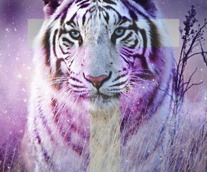 amazing, wild, and love image