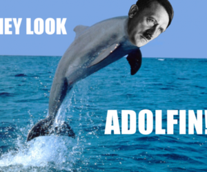 dolphin, funny, and hitler image