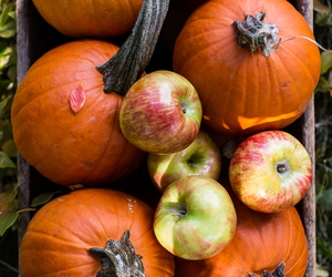 pumpkin, autumn, and apple image