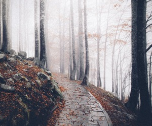 trees, forest, and nature image