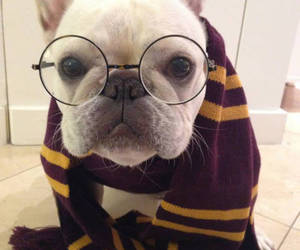 dog, harry potter, and glasses image