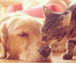 cat, doggy, and puppy image