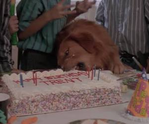cake, dog, and funny image