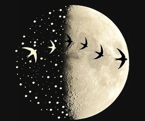 moon, birds, and black and white image