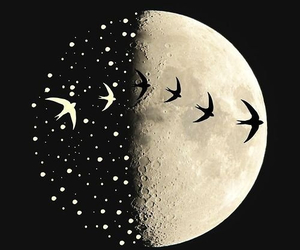 moon, bird, and night image