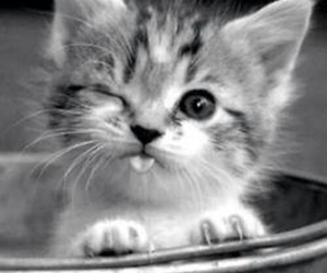 adorable, kitty, and black&white image