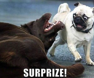 dog, funny, and surprise image