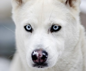 dog, white, and animal image