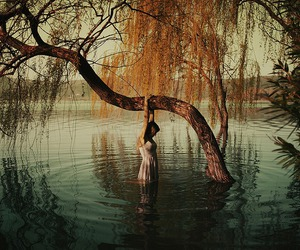 tree, water, and photography image