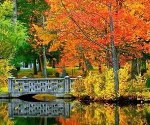 autumn and bridge image