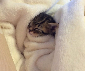 cosy, kitten, and snuggles image