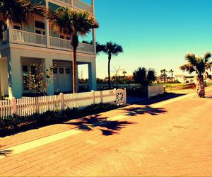 beach house, palm trees, and photography image