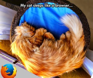 firefox, funny, and cat image