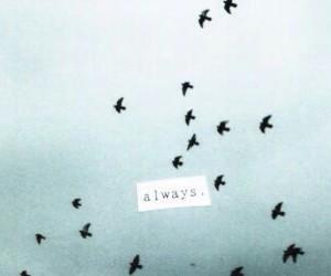 always, bird, and sky image