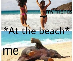beach, lol, and funny image