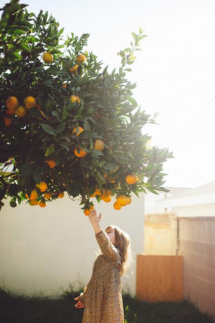 orange, tree, and child image