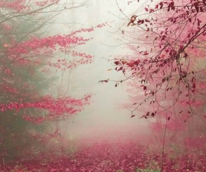 nature, pink, and autumn image