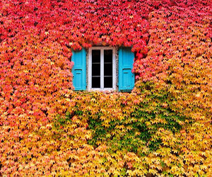 window, autumn, and leaves image