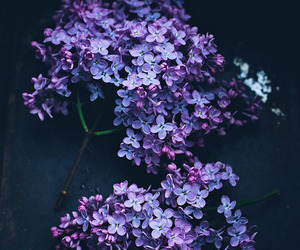 flowers and lilac image